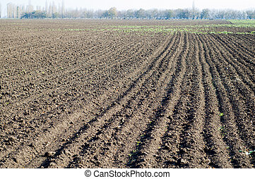 tillage - autumn field after sowing