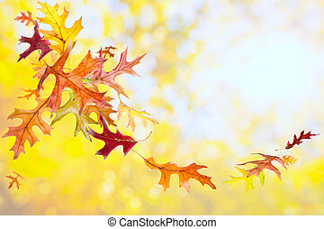 Fallen Leaves Background - Oak autumn background with...