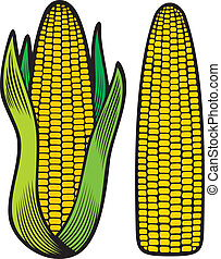corn (corncob, corncob with green leaves)