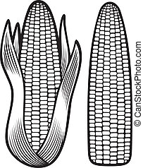 corn (corncob, corncob with leaves)