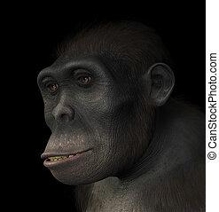 Homo Habilis Portrait - Portrait of a Homo Habilis, a...