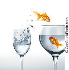 Gold fish smiling jumping from a glass of water, to a larger...