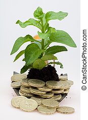 growing cash - banking concept of a plant with coins round...