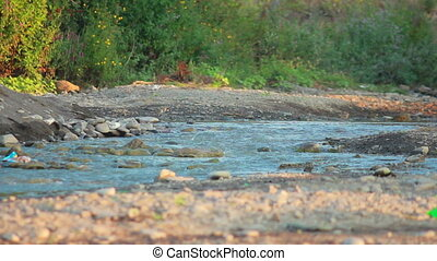 Small Mountain River - small mountain river flowing along...