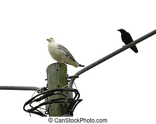 A very large Seagull and a black crow sitting high atop of a...