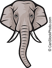 elephant head (indian elephant)