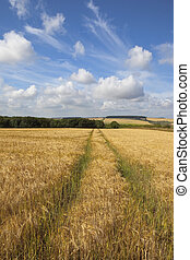 wolds barley - a scenic agricultural landscape with fields...