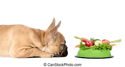 Dog with a feeding bowl full of vegetables - a dog lies...