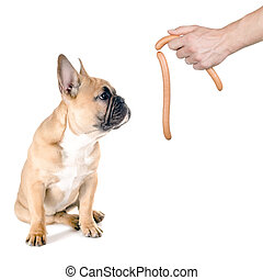 Sausage for the dog - a dog looks after a sausage before...