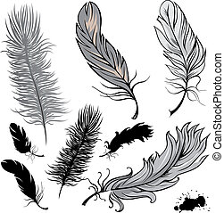 Feathers - Set of  illustration feathers