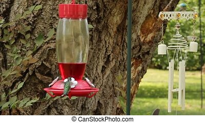hummingbird hovers and then drinks from a plastic feeder