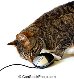 cat playing with mouse - tabby cat sniffing a computer mouse...