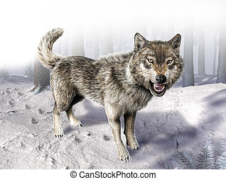 Wolf growling standing on snow. With fading forest on...