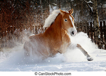 horse in snow - palomino horse running in snow