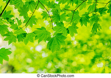 Natural Green Background - Natural Green Backgroud Leaves...