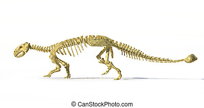 Photorealistic 3 D rendering, scientifically correct of an Ankylosaurus dinosaurus full bone skeleton. Side view with drop shadow. Clipping path included.