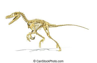 Velociraptor, Recorte, Lleno, Esqueleto, correcto,...