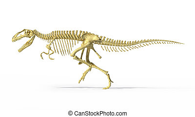 Gigantosaurus dinosaurus full photo-realistic skeleton, scientifically correct, side view. On white background  with drop shadow and with clipping path.