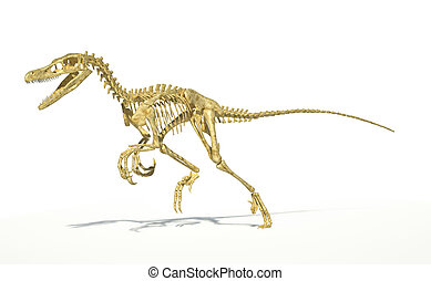 Velociraptor dinosaur, full skeleton scientifically correct, with drop shadow on white background. Clipping path included.