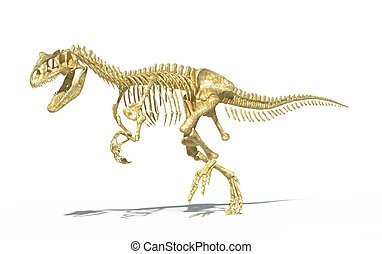 Allosaurus skeleton photo-realistic, scientifically correct....