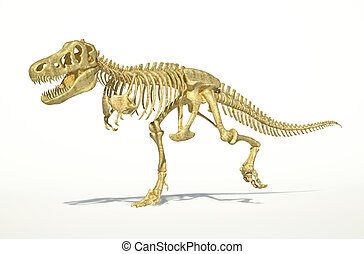 T-Rex dinosaur full skeleton, photo-realistic,...