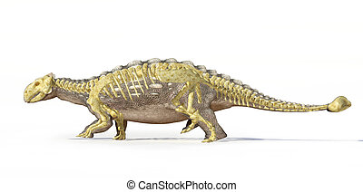 Photorealistic 3 D rendering, scientifically correct of an Ankylosaurus, with full bone skeleton superimposed, Side view with drop shadow. Clipping path included.