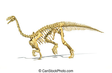 Plateosaurus dinosaur, full photo-realistic skeleton, scientifically correct. Perspective view On white background. WIth drop shadow and clipping path included.