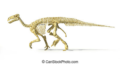Iguanodon dinosaur full skeleton photo-realistic and scientifically correct, side view. On white background with drop shadow and clipping path.