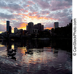 Melbourne sunset with ducks on the Yarra river