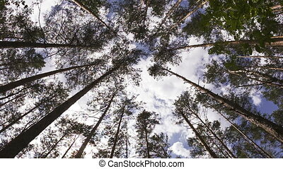 summer forest with tree trunk and cloudy sky. Wide angle...