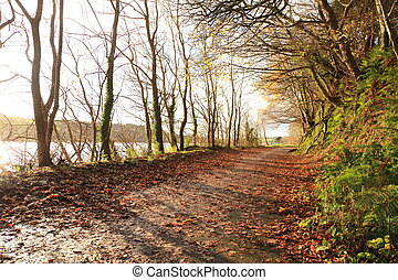 Autumn Pathway CoCork, Ireland Park Road Landscape with the...