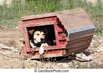 appeasing dog in an inverted wooden hut on a sunny day in...