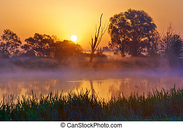 Beautiful foggy sunrise over the Narew river, Mazovia,...