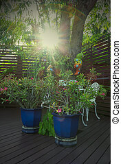 Outdoor garden with sun beam