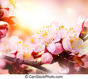 Spring Blossom. Apricot Flowers
