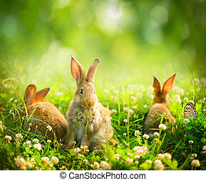 Rabbits Art Design of Cute Little Easter Bunnies in the...