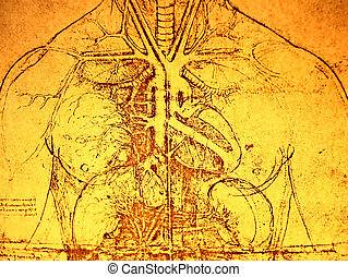 Old Anatomy - Photo of the Vitruvian Man by Leonardo Da...
