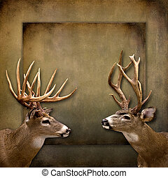 Buck/Deer Background - Two buck on textured background