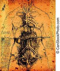 Anatomy art by Leonardo Da Vinci from 1492 on textured...