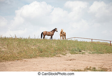 Two horses outdoors. Natural light and colors