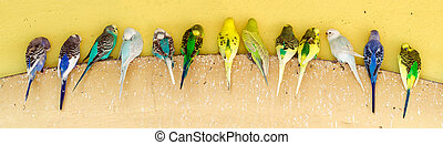 Line of parakeets perching on ledge
