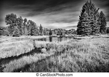 Schwabacher Landing - Summer morning view of the Snake River...