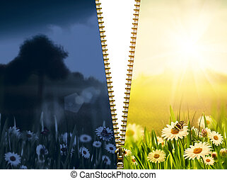 day and night. Natural backgrounds with beauty chamomile flowers