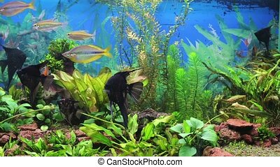 aquarium with brightly colored fish