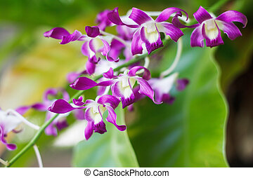 Purple orchid flower in nature garden