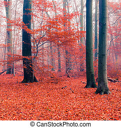 Foggy autumn forest - Colorful foliage in the autumn forest