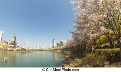 Seoul City 216 - 216) Time lapse of a park in Jamsil during...