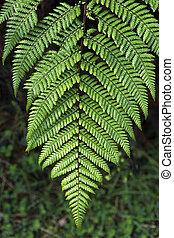 Silver fern sign of Newzealand