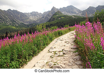 beautiful view on hiking path in Tatra Mountains in Poland