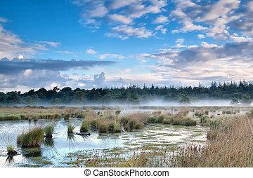 mist over swamp in the morning - fresh mist over swamp in...